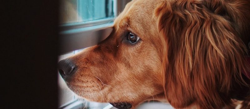 LEAF Animalcare