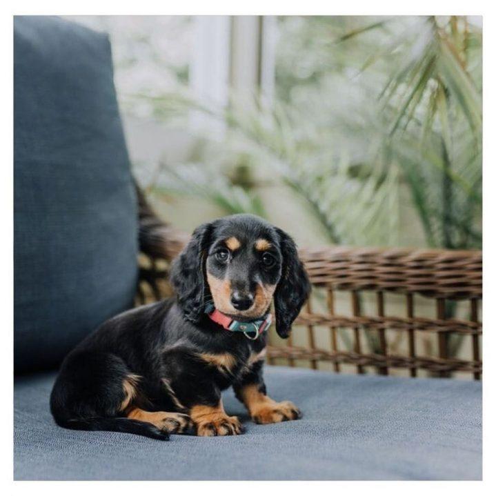 Supplementen voor honden - Leaf animal care